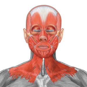 Mišice celega obraza in vratu