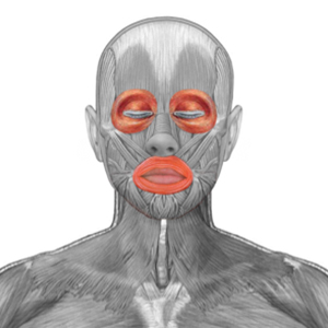 Circular muscles of the eyes and mouth