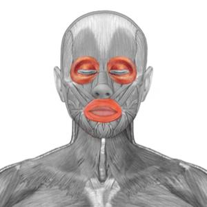 Kreisförmige Muskeln im Augen- und Mundbereich